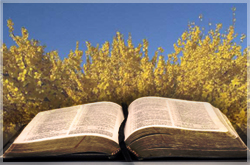 Plants of the Bible: Broom Tree - Jerusalem Prayer Team
